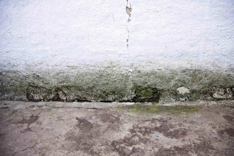 mildew house facade
